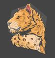 leopard lion vector image vector image