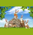 rabbit in nature scene vector image