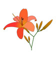 blooming lilies flat vector image vector image