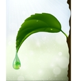 green leaf with a drop of flowing vector image