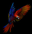 portrait a macaw parrot in flight vector image