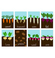 roots vegetables garden growing cards vector image