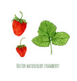 with watercolor strawberry hand drawn berry for vector image vector image