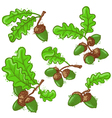acorns set vector image vector image