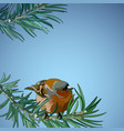 card with bullfinch on the fir-tree vector image vector image