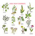 herbal therapy for bronchitis ivy ginger mullein vector image vector image