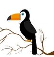 toucan parrot brazil on branch vector image