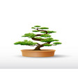 bonsai plant in the pot vector image vector image