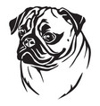decorative portrait of pug vector image