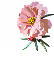 Delicate pink rose flower isolated vector image vector image