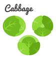 different of three cabbage icon set vector image vector image