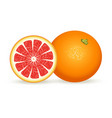 fresh grapefruit in realistic style vector image vector image