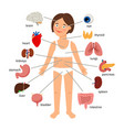 girl internal organs female human internal organs vector image vector image