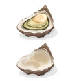 oyster shell vector image vector image