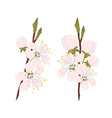Sakura on the white background vector image