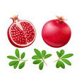 set of ripe juicy pomegranate vector image vector image
