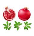 set of ripe juicy pomegranate vector image