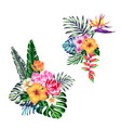 tropical collection with exotic flowers and vector image vector image