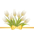 White tulip spring flowers vector image vector image
