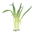 a bunch of lemongrass vector image vector image