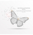 butterfly low poly wire frame on white background vector image vector image
