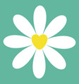 white chamomile daisy icon cute flower plant vector image vector image
