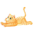 a lazy cat on whiye background vector image vector image