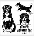 bernese mountain dog - set isolated vector image vector image
