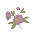 black onyx helleborus flowers design vector image vector image