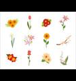 decorative flower plant set vector image