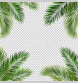 frame with palm leaf isolated transparent vector image vector image