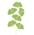 ginkgo biloba leaves vector image vector image