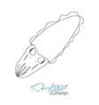 squid seafood isolated sketch sea animal vector image vector image