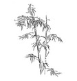 chinese traditional bamboo branches isolated on vector image vector image