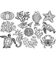 sketch of sea shells fish corals and turtle vector image vector image