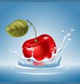 cherry in water splash vector image vector image
