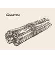 Cinnamon vintage hand drawn vector image vector image