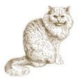 engraving of big cat vector image vector image