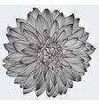 Ink drawing of black dahlia flower