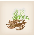 Cumin seed with flowers and leaves vector image vector image