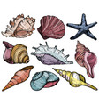 set with seashells and starfish vector image vector image