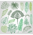 Tropical palm leavesbranches setOutlineGreen vector image vector image