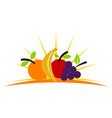 fruit store vector image