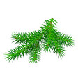 green branch pine tree isolated on white vector image vector image