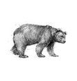 portrait a brown bear on white background vector image vector image