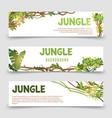 tropical plants banner jungle leaves