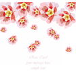 Delicate rose flowers card vector image