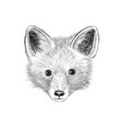 fox baby face wild animal sketch vector image vector image