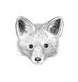 fox baface wild animal sketch vector image