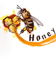 hand painted detailed bee sitting on a honey comb vector image